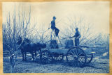 Workmen spraying fruit trees (205s)
